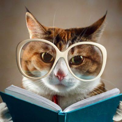 Debunking Cat Behavior Myths
