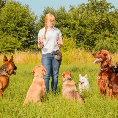Choosing the Right Dog Trainer