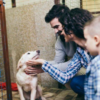 Checklist Adopting a Dog