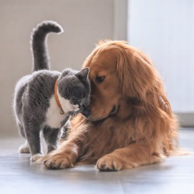 Why Multiple Pets Might Be Better Than One