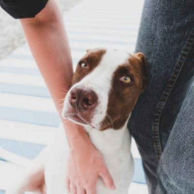 Pet Fostering Increases During COVID
