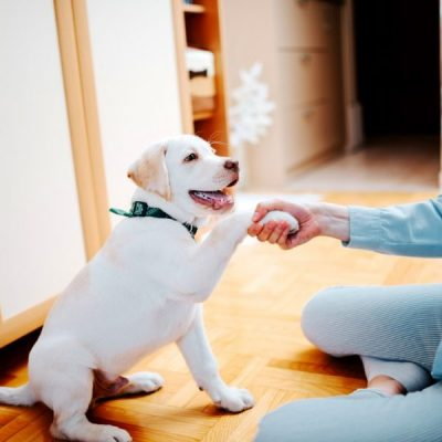 January is National Train Your Puppy Month: Tips for Training Your Puppy