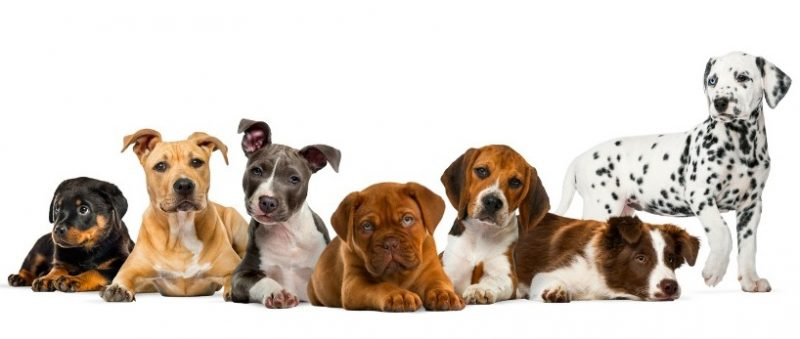 Top 8 Tips for First Time Puppy Parents