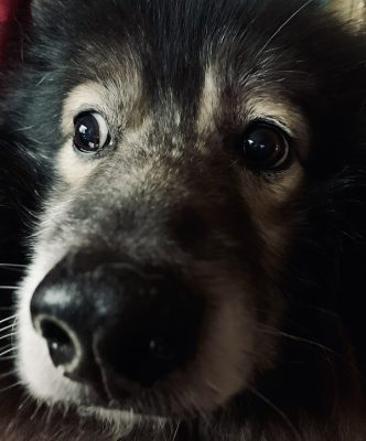 Dog Anxiety Signs and Tips