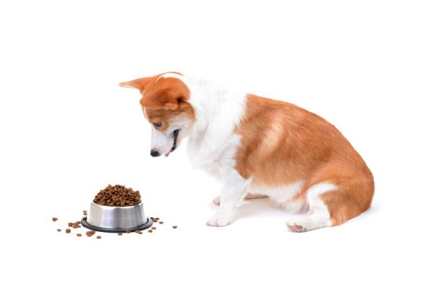 looking for holistic dog food?